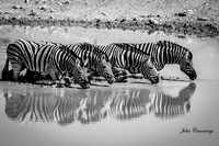 Wildlife in Black & White