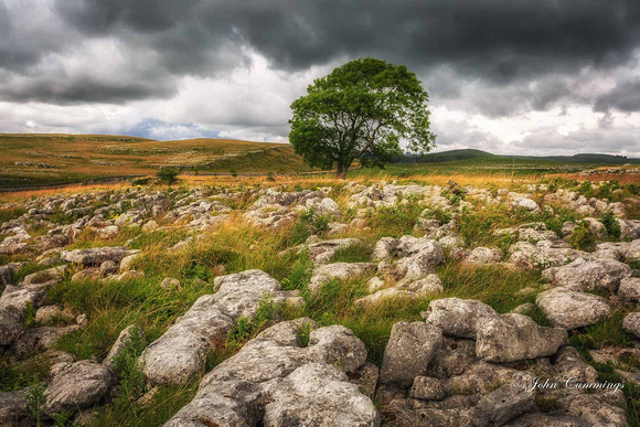 Lone Tree, Malham Dales